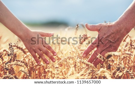 Two generations. The woman's and the kid's hand touch the wheat ears. Harvest, lifestyle, family concept