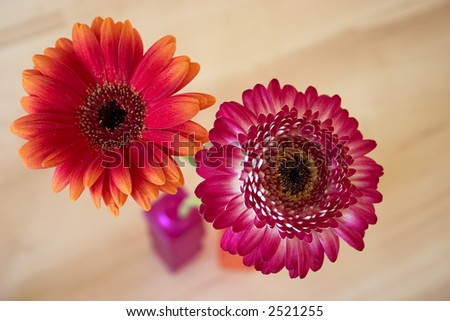 Two gerbera in a vase