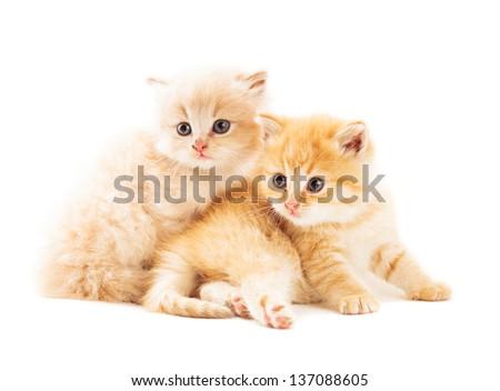 Two ginger kittens lying on white background