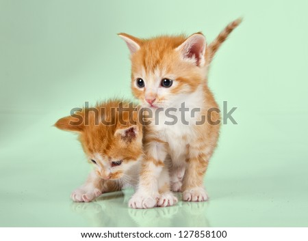Two ginger kittens on a green surface with a reflection visable - stock photo
