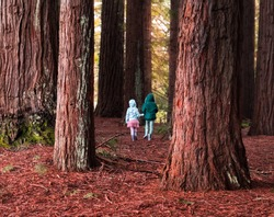 two girls in the woods - sisters venture into red forest, winter, New Zealand