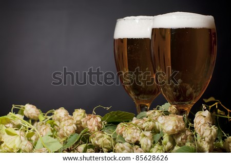 Two glasses of beer froth with hop over black