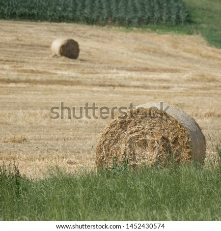 Two golden and compressed straw bales on a threshed grain field with focusing on the one round bale laying in the front of the picture behind a green meadow. #1452430574