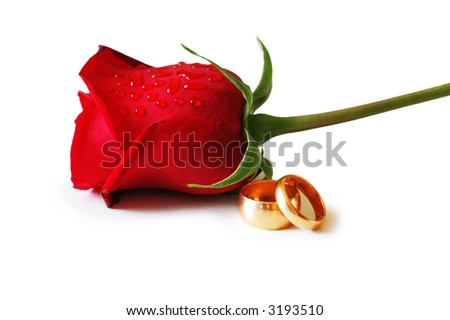 stock photo Two golden wedding rings and a red rose
