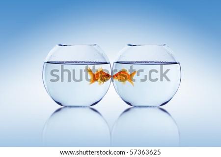 goldfish tank. dresses a goldfish tank