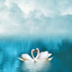 Two graceful swans in love reflecting in calm emerald water on foggy background. Swans couple on emerald lake