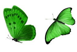 two green butterflies isolated on white background