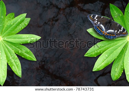 Two green leaf on water with butterfly