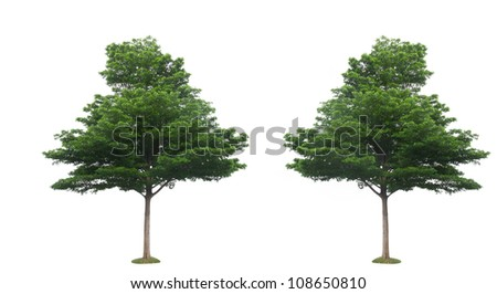 Two green tree isolated on the white background