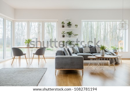 Two hairpin tables with fresh tulips standing in bright living room interior with potted plants, windows, corner couch and carpet on the floor