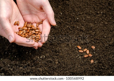two hand holding seeds and seeds in the soil