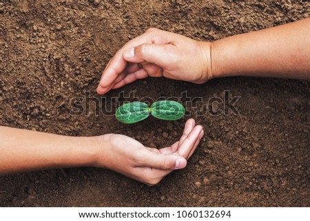 two hand protection green seedling growing in soil. concept eco