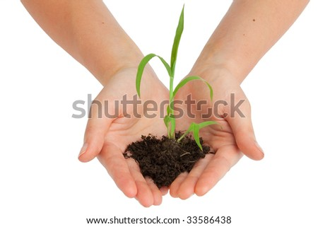 two hands are holding a young plant