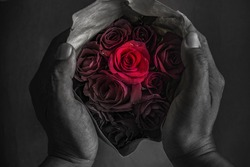 Two hands holding a beautiful red roses that are going to turn black is like trying to protect beautiful love, not to be disappointed and cry.