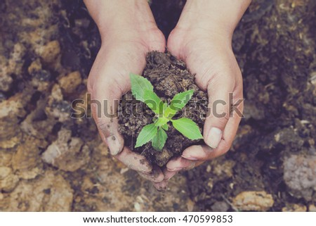Two hands holding a little green tree plant with soil,Green tree growing on hand, Ecology concept - Shutterstock ID 470599853