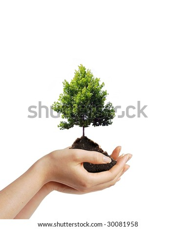 Two hands holding a young tree sapling