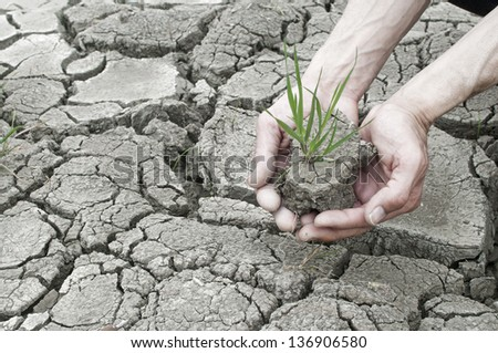 Two hands holding green grass plant over cracked clay land