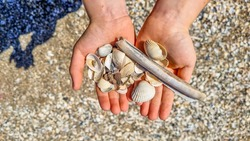 Two hands of a child full of different sea shells collected at the beach. Clean natural beach, sand background, close up.