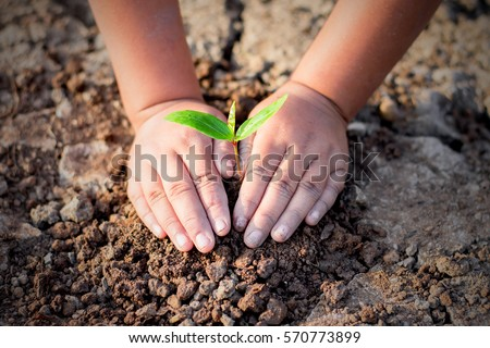 Two hands of the children are planting the seedlings into the soil, ecology concept.