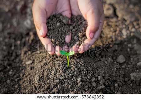 Two hands of the children are planting the seedlings into the soil, ecology concept. - Shutterstock ID 573642352