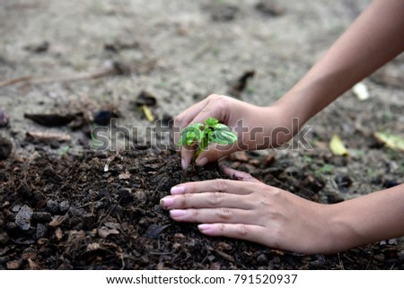 Two hands of the children are planting the seedlings into the soil, ecology concept. - Shutterstock ID 791520937