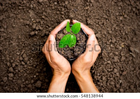 Two hands of the men was carrying a bag of potting seedlings to be planted into the soil. - Shutterstock ID 548138944