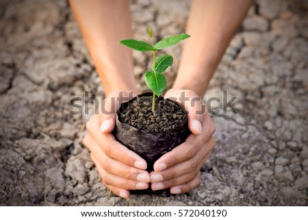 Two hands of the men were holding a seedling nursery bags placed on the ground to dry. - Shutterstock ID 572040190