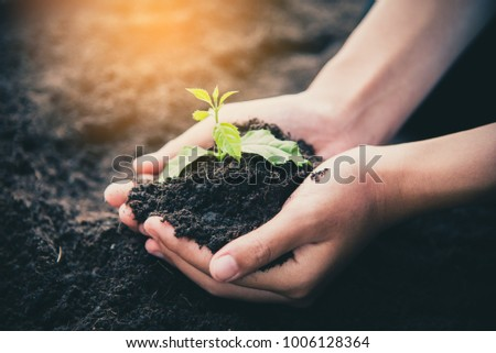 Two hands of was carrying of potting seedlings to be planted into the soil.- concept love world - Shutterstock ID 1006128364