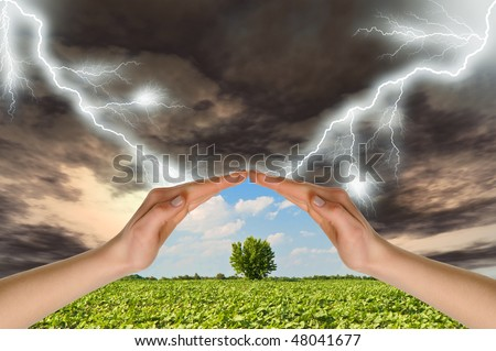 Two hands preserve a green tree against a thunder-storm. Concept of preservation of the nature