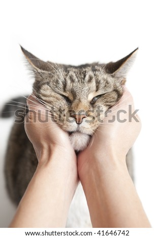 Two hands squeezing and holding cat's head