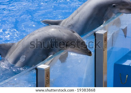 Two happy dolphins