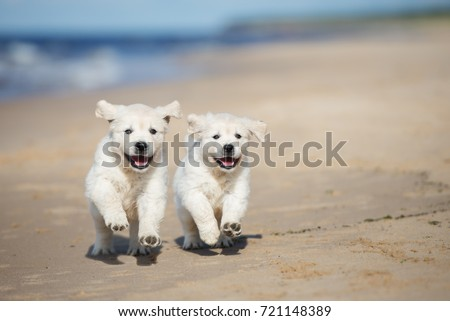 two happy puppies running on a beach Сток-фото ©