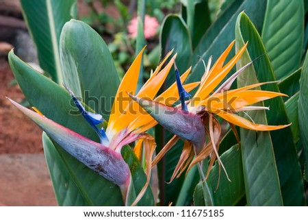 Colour Picture Singapore Bird on Flower Color View Of Nice Color Misty Find Similar Images