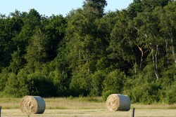 Two hay rolls in a mowed field. Trees, meadow and sky in the background.