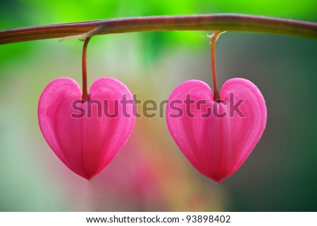 Two heart flower. Conceptual design.