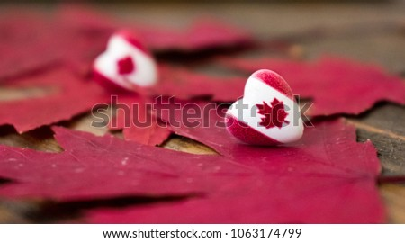 Two hearts with Canada flag over red maple leaves with wooden background. Canada day #1063174799