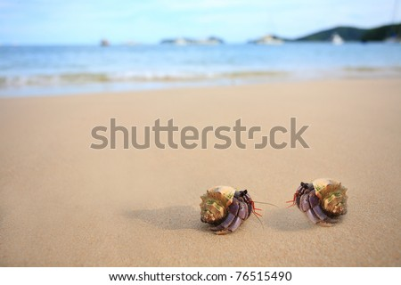 two hermitcrab on the beach of phuket thailand