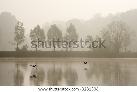 Two herons flying over pond in a misty morning