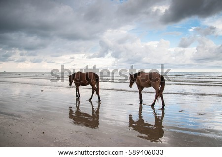 two horse play at the seaside with a beautiful cloudy sky background