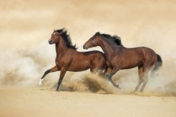 Two horse play with dog in sandy dust