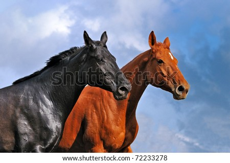 Two horses  against dramatic sky
