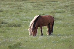 Two horses are grazing on the grassland