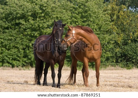 Two horses bring together