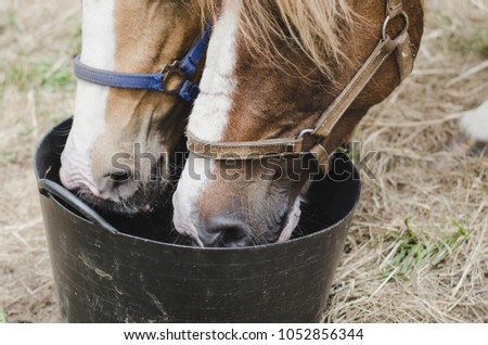 Two horses drinking water.