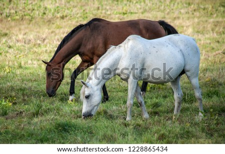 Two horses go outside and eat grass #1228865434