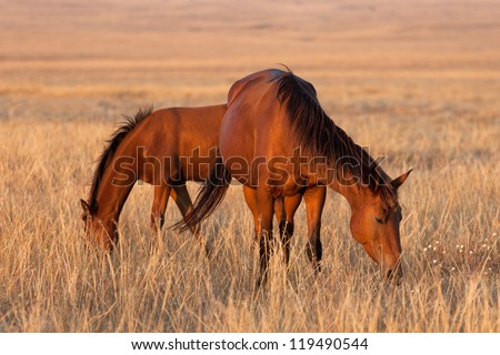 Two horses grazing in pasture. Close-up view.