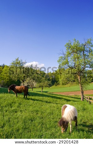 Two horses grazing on green meadow. Lots of blue sky for your text.