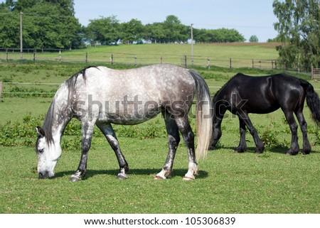 Two horses grazing on the green meadow