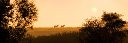 Two horses in a meadow and the rising sun in the early morning in summer. Ukraine