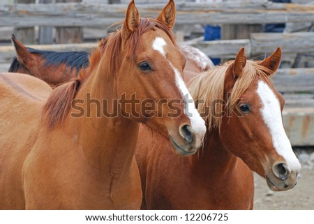 Two horses in an old wooden corral.